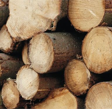 close up of neatly cut logs that are stacked upon each other.