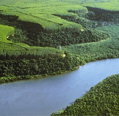 eagle view of forest in Uruguay where Direct Timber source hardwood from responsible suppliers.
