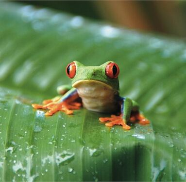 picture of a colourful frog on a leaf to represent Direct Timber's responsibility to the environment.