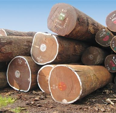 large logs lying on the ground outside used to represent Direct Timber's sourced hardwoods and softwoods.
