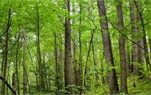 view of a forest to represent Direct Timber's hardwood product section.